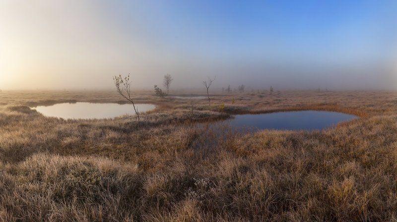 Болото, Ленобласть, Ленинградская область, туман \