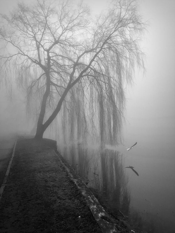 bw, fog photo preview