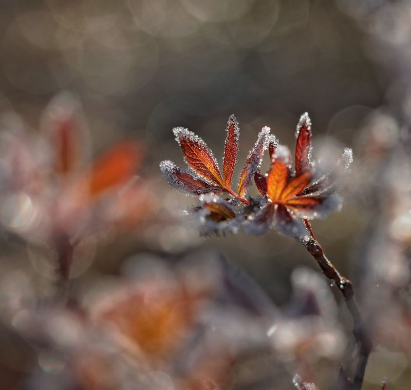 осень, макро, якутия, Зима - ювелирphoto preview