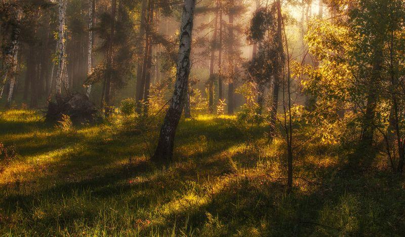 landscape, пейзаж, утро, лес, сосны, деревья, солнечный свет, солнечные лучи, солнце, природа утроphoto preview
