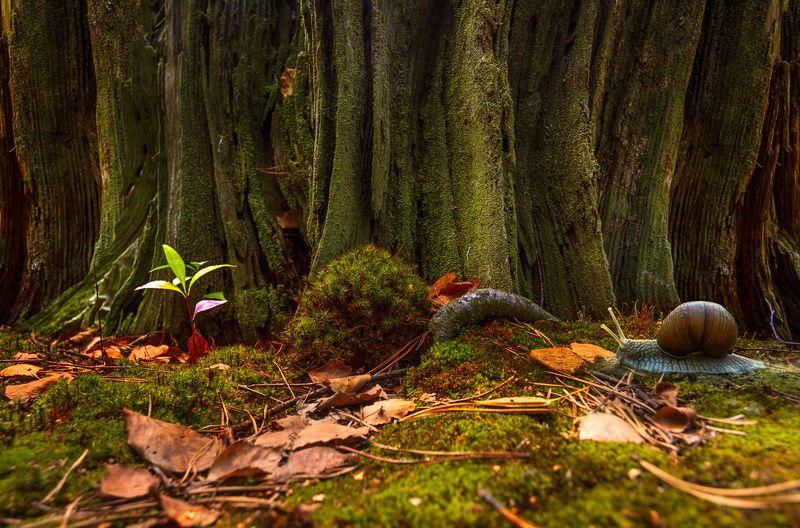 nature, природа,, дерево, ветки, листья,  весна, пень, улитка, мох у пенькаphoto preview
