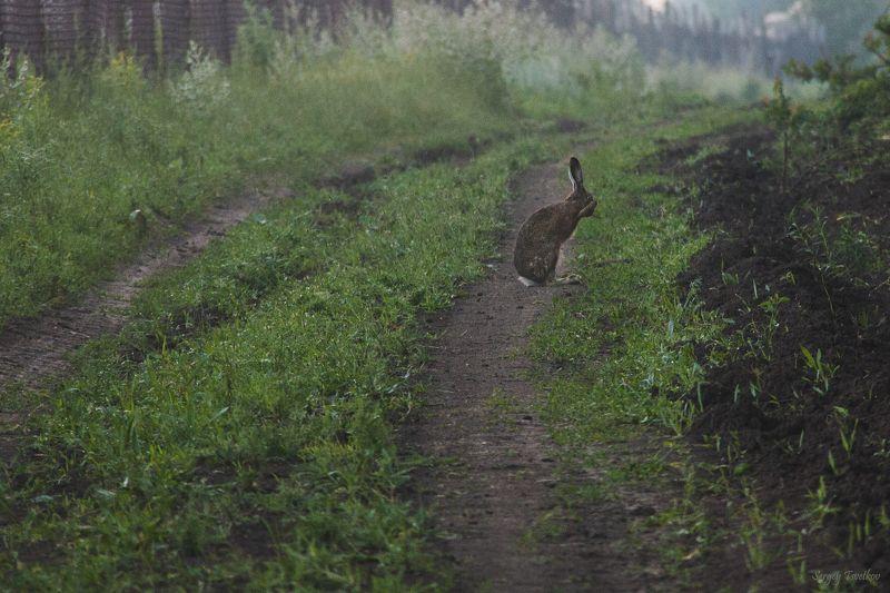 заяц, природа, животные,  Раз, два, три, четыре, пять, я иду тебя искатьphoto preview