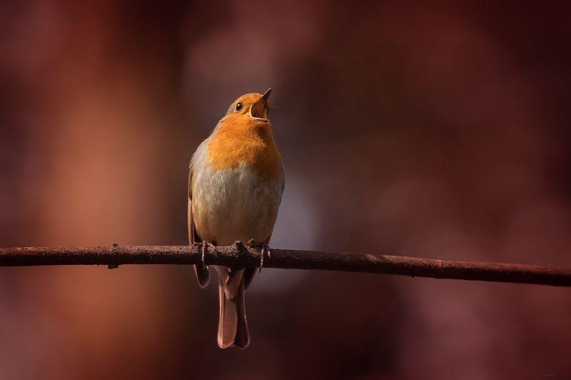 природа, лес, животные, птицы Встречая веснуphoto preview