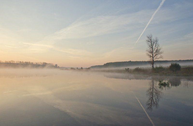 утро рассвет пейзаж природа Дерево на той сторонеphoto preview