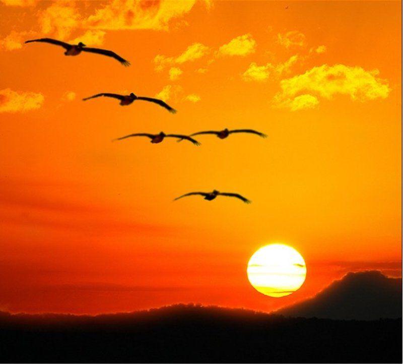 полет- символ свободы Опять про крыльяphoto preview