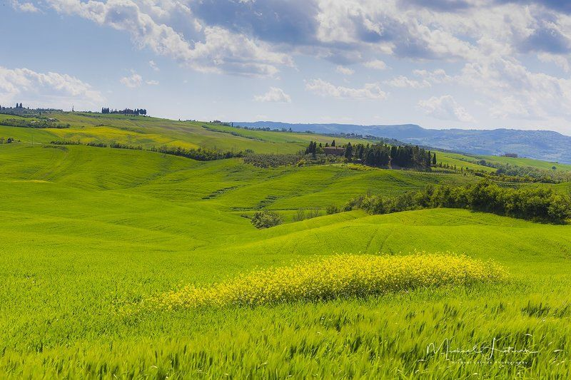 Spring,Toscan,Italy, green, wheat, velvet,flowers, sky,blue,cypress Spring in Toscanphoto preview