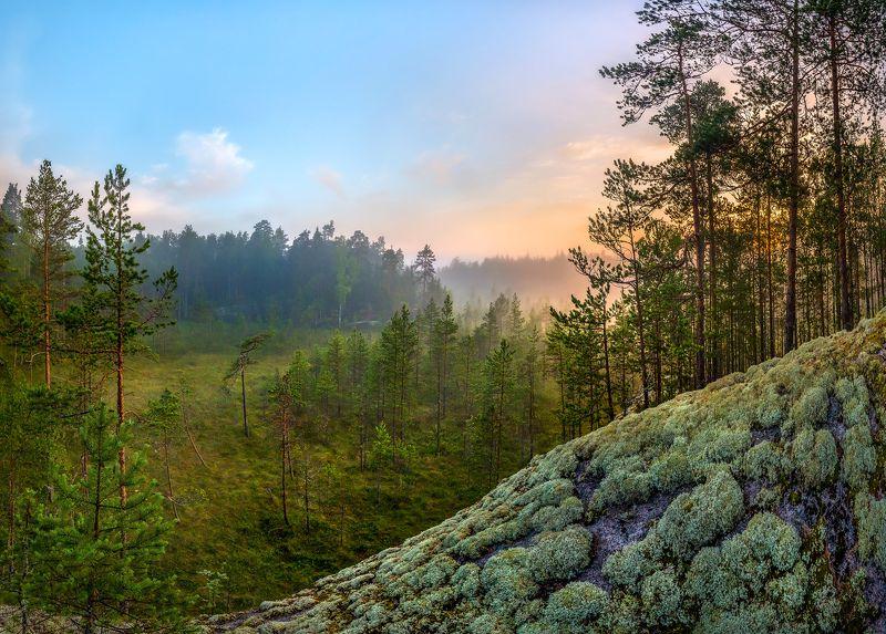ленинградская область, болото, рассвет, сосна, фотопроект, лето, туман, мох, ягель, лес., Заросшее болото.photo preview