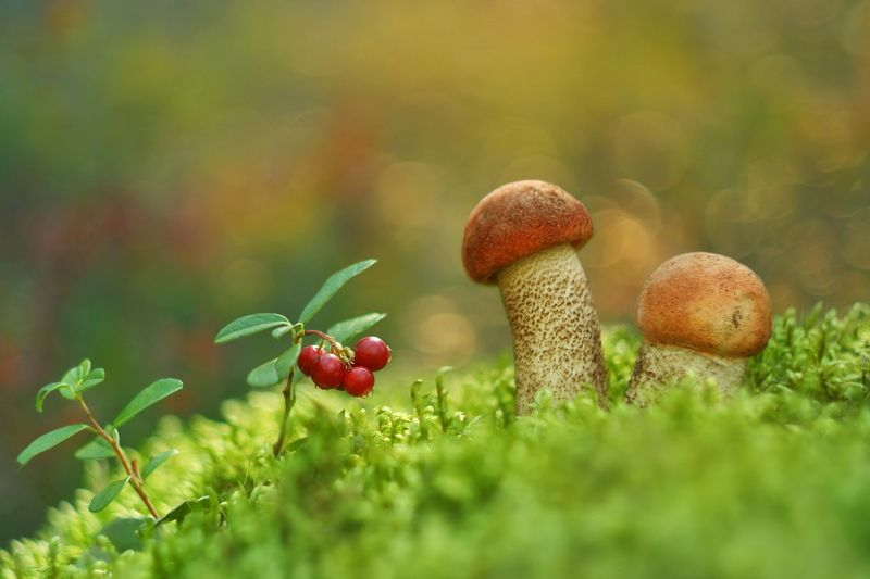 грибы, природа, гелиос Грибы-грибочкиphoto preview