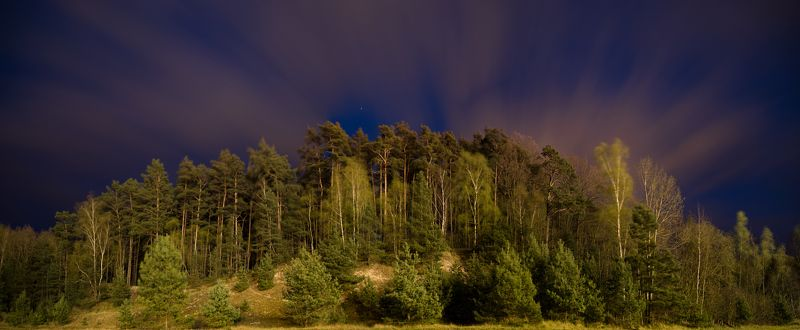 Night forestphoto preview