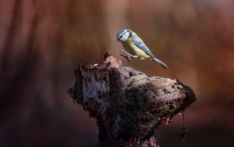 природа, лес, животные, птицы Попрыгушкаphoto preview