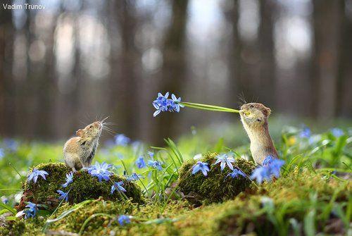 Сумасшедшая весна