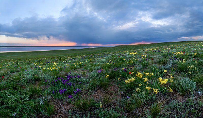 ирисы, Лопуховатое, Ростовский заповедник, степь, цветы, весна \