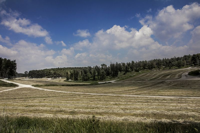 Середина апреля. Под Иерусалимом. Время уборки пшеницы.photo preview