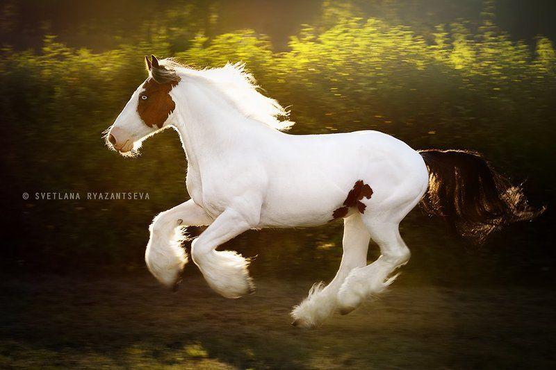 horse, run, gallop, motion, лошадь, лошади, в движении закатноеphoto preview