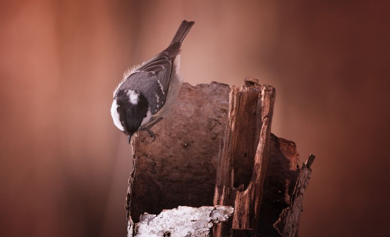 природа, лес, животные, птицы Любопытствоphoto preview