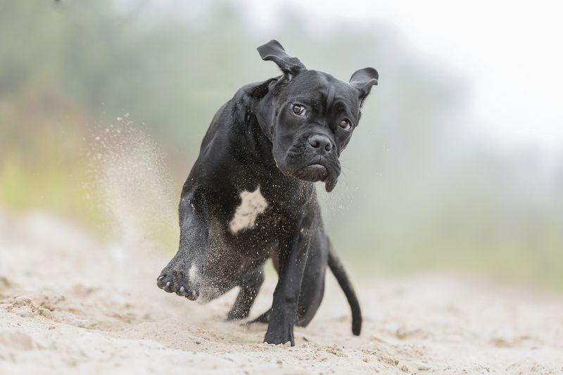 собака, щенок, динамика.. смешнулька...photo preview