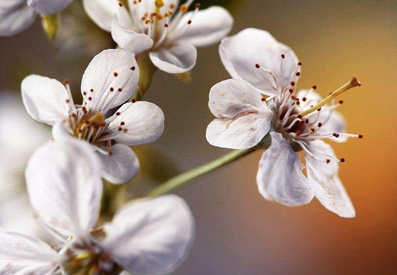 Springtime...photo preview