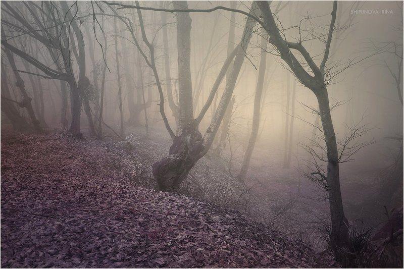 Мистический лес 4photo preview
