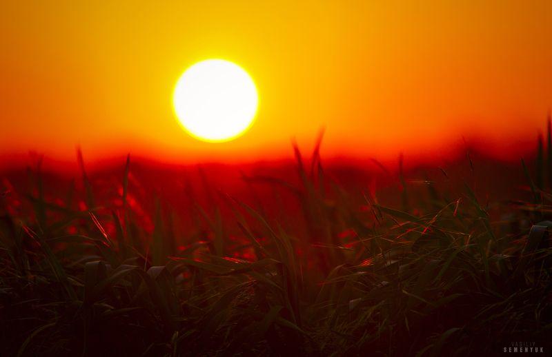 крым, солнце, поля, закат, молодая пшеница, ветер, трава, настроение. Под тёплым ветром.photo preview