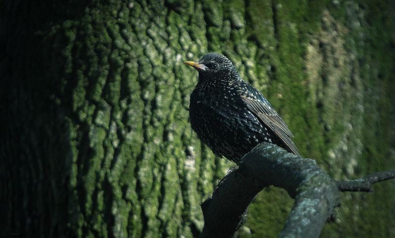 природа, лес, животные, птицы Закамуфлировалсяphoto preview