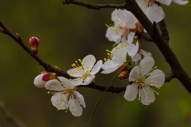 nature, природа,, дерево, ветка, листья,  весна, цветы, весенние зарисовкиphoto preview