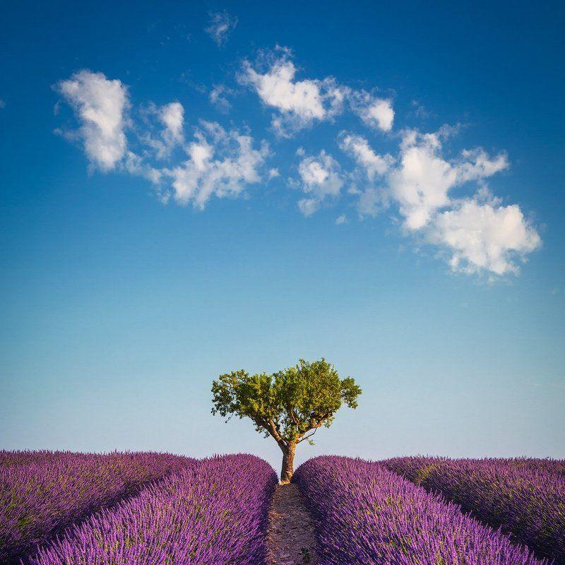 provence uchorczak  Provencephoto preview