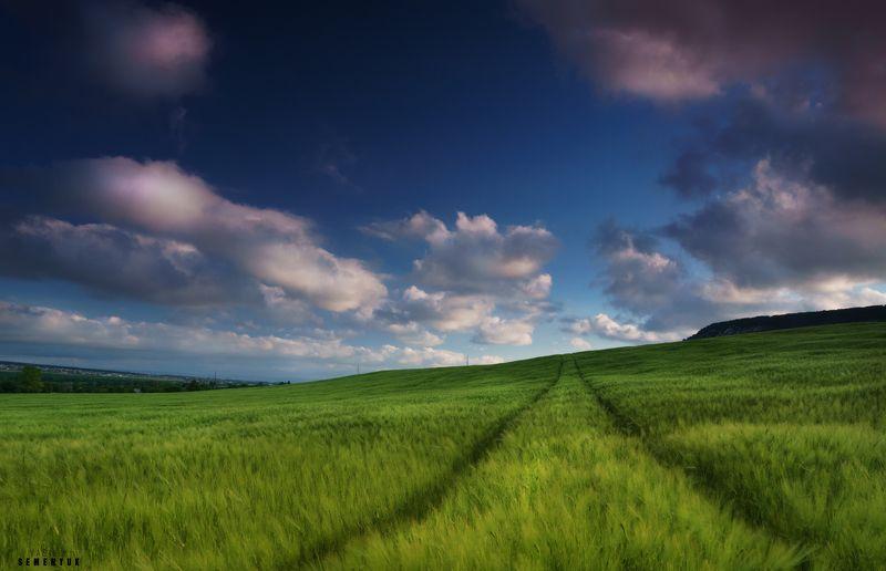 Крым, поля, пшеница, облака, трава, ветер. Крымский вельвет.photo preview