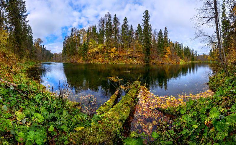 осень, берег, озеро, лес, листья, лопухи, природный заказник, ленинградская область. Осеннее озеро.photo preview