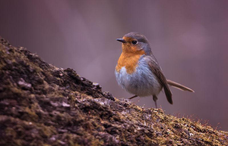 природа, лес, животные, птицы Вот кто-то в горочку поднялся ... :)photo preview