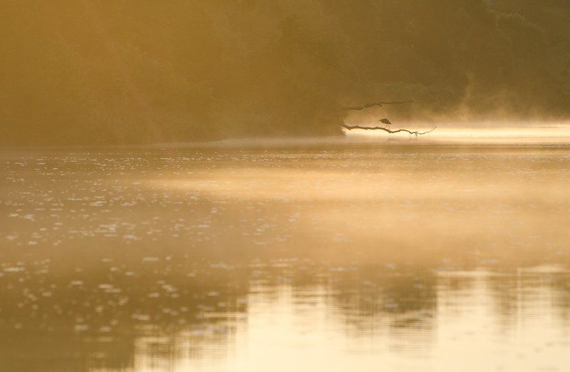 природа птица цапля река упа якшино Только стоячие местаphoto preview