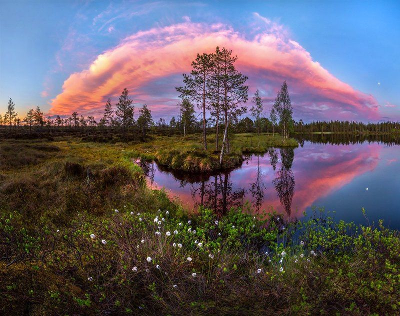 север, белые ночи, лето, озеро, сосны, облака, пушица. Роскошь белых ночей.photo preview