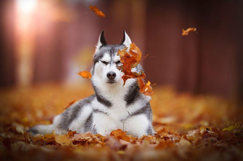 собака, осень, парк, осенние зарисовкиphoto preview