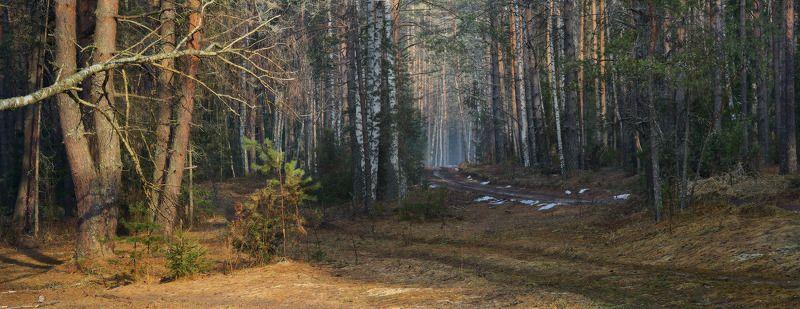 апрель лес снег утро Две дороги в апрельский лесphoto preview