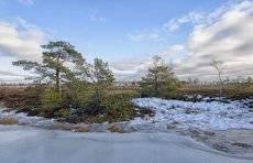 на болотах предчувствие весны 2