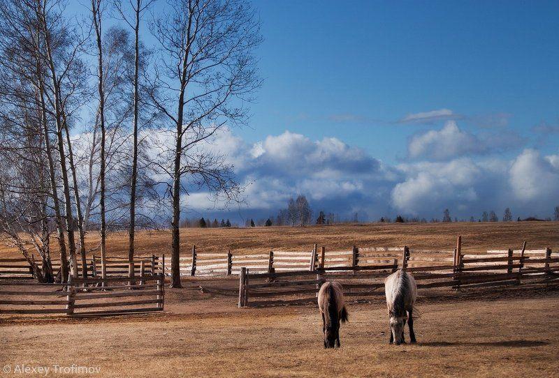 весна, апрель, пейзаж, пастораль, лошадки Апрельская пасторальphoto preview