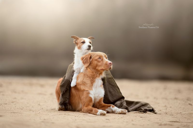 собаки, друзья, осень Друзьяphoto preview