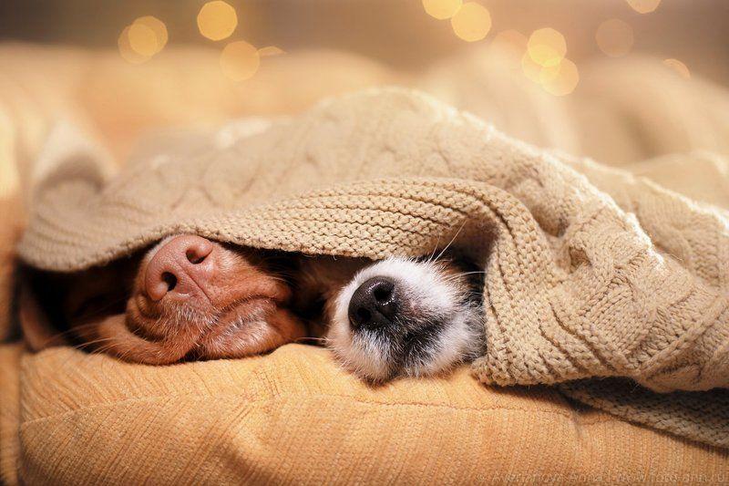 Собака, собаки, уютный, носик Милые носикиphoto preview