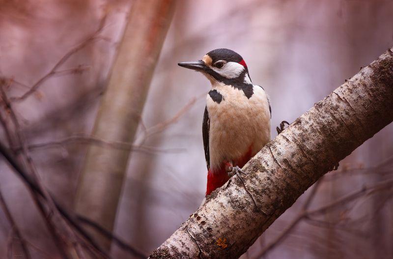 природа, лес, животные, птицы Санитарphoto preview