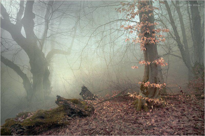 Мистический лес 5photo preview