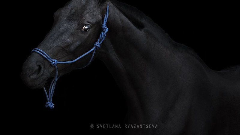 horse, black horse, black, dark, look, horses, horse head, portrait, портрет, лошадь, лошади out of darknessphoto preview