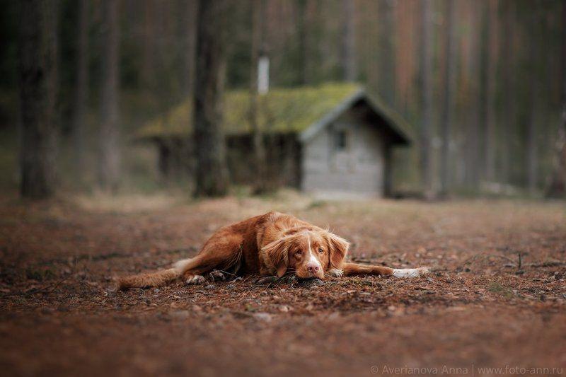 собака, природа, лес, домик Отдых в лесуphoto preview