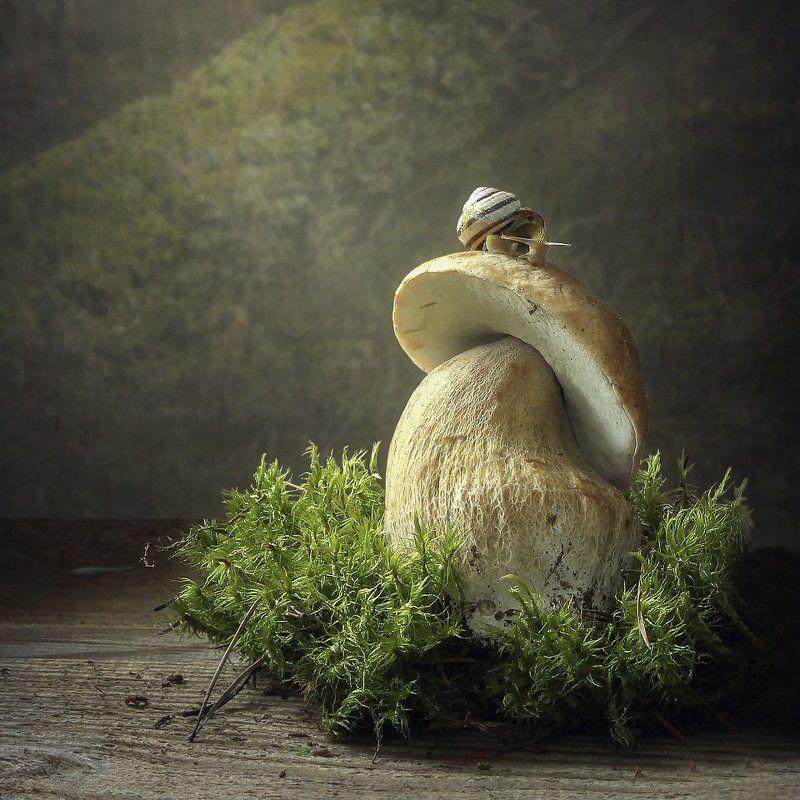 натюрморт, лето, белый гриб, улитка, мох, лесной фон Летний домикphoto preview