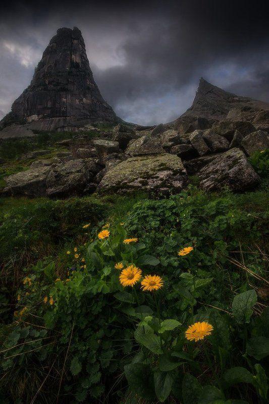 ергаки, горы, саяны, лето, сибирь Цветы у Параболыphoto preview
