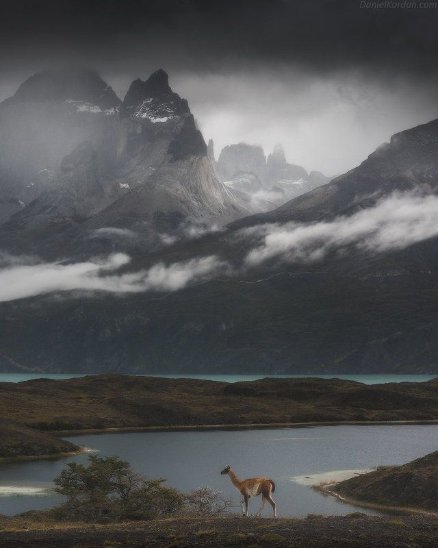 Патагония Wild Patagoniaphoto preview