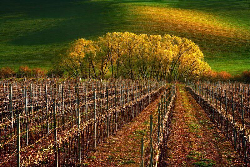 morawy,czech republik,krajobraz Morawy winnicaphoto preview