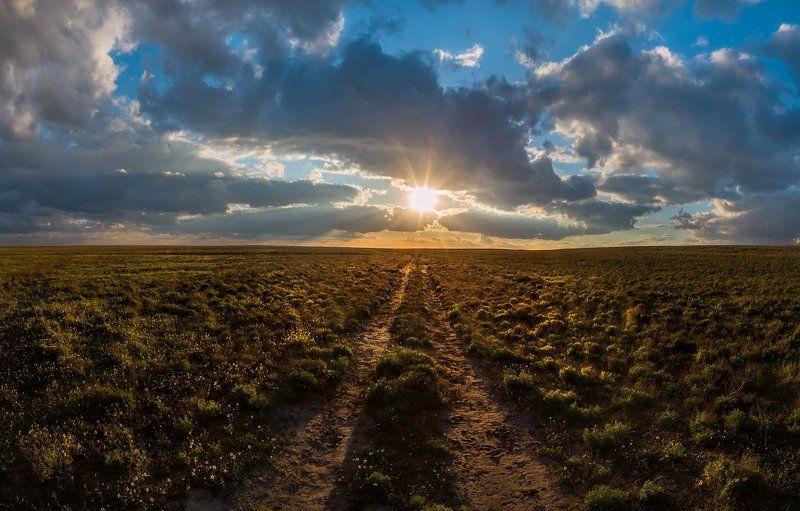 степь, весна, астраханская область, поволжье, рассвет, закат, ромашки, мак, полынь, Весенняя астраханская степь в районе нижнего Поволжья.photo preview