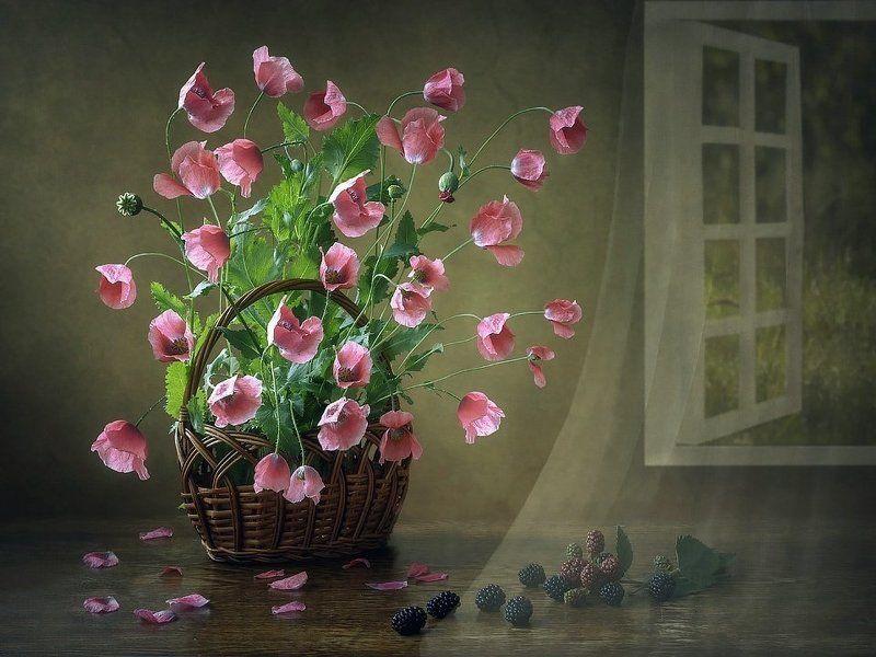 натюрморт, цветочный натюрморт, розовые маки, лето, летний задний фон, ежевика, корзина Натюрморт с макамиphoto preview