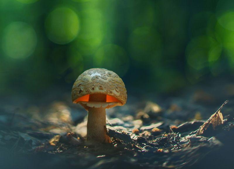 грибы, природа Этот гриб в лесу растет...photo preview