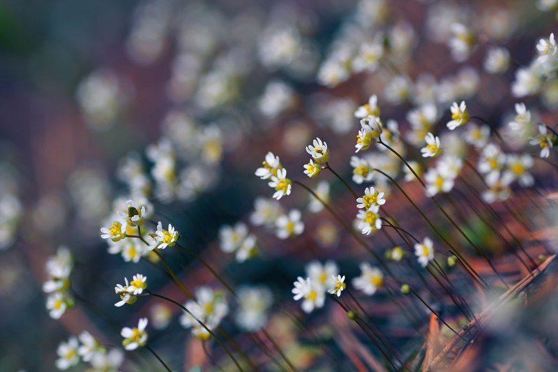 цветы, белый, свет, радуга, блики, весна ***photo preview