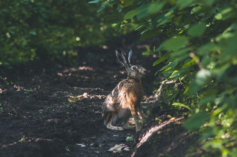 животные, природа, заяц, лес, страх Глаза полные страхаphoto preview